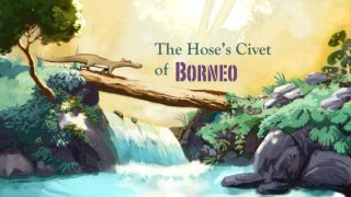 La Civette de BORNEO – The Hose's Civet of BORNEO